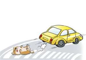 宠物狗冲上马路被撞死 狗主人竟向的哥索赔千元